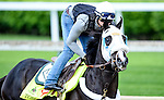 LOUISVILLE, KY - MAY 04: Tom's Ready, trained by Dallas Stewart and owned by G M B Racing, exercises and prepares during morning workouts for the Kentucky Derby and Kentucky Oaks at Churchill Downs on May 4, 2016 in Louisville, Kentucky. (Photo by John Voorhees/Eclipse Sportswire/Getty Images)