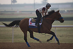 DUBAI,UNITED ARAB EMIRATES-MARCH 23: Hoppertunity,trained by Bob Baffert,exercises in preparation for the Dubai World Cup at Meydan Racecourse on March 23,2017 in Dubai,United Arab Emirates (Photo by Kaz Ishida/Eclipse Sportswire/Getty Images)