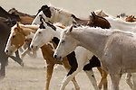 A variety of tans, whites and browns adorned a herd of horses at the Mantle Ranch in Three Forks Montana