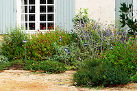 In the court yard a herbal garden with plants typical of the local 'garrigue' bushes. Slate signs with text marking the plants. Chateau Mourgues du Gres Grès, Costieres de Nimes, Bouches du Rhone, Provence, France, Europe