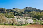 Germany, Baden-Wuerttemberg, Markgraefler Land, landscape near Obereggenen | Deutschland, Baden-Wuerttemberg, Markgraeflerland, Landschaft bei Obereggenen