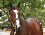 11 September 2010.  Hip #14  A.P. Indy - Balance colt, consigned by Mill Ridge Sales.