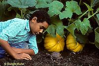 1R14-010z  Eastern Box Turtle - being watched by boy in garden near pumpkins - Terrapene carolina