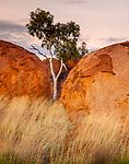 Ghost gum (Corymbia aparrerinja), Karlu Karlu / Devils Marbles Conservation Reserve, Northern Territory, Australia<br /> <br /> Canon EOS 5D Mark II, EF24-105mm f/4L IS USM lens, f/14 for 5 seconds, ISO 100