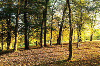 Autumn woodland in Queen's Park, Glasgow