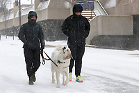 Kelsee (left) and Chad Moore, of Manhattan, KS., walk with Scout, a four year old Great Pyrenese, Monday, February 15, 2021, through a windy snowfall down East Avenue in Fayetteville. The National Weather Service is forecasting several inches of snow throughout the state through Wednesday and Thursday. Check out nwaonline.com/210216Daily/ and nwadg.com/photos for a photo gallery.<br /> (NWA Democrat-Gazette/David Gottschalk)