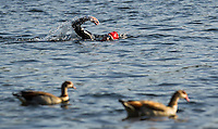01 JUNE 2014 - LONDON, GBR - A competitor swims in The Serpentine in Hyde Park in London, Great Britain during the Open Age Group Olympic Distance race of the 2014 ITU World Triathlon Series (PHOTO COPYRIGHT © 2014 NIGEL FARROW, ALL RIGHTS RESERVED)