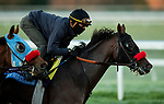 October 31, 2020: Hot Rod Charlie, trained by trainer Doug F. O'Neill, exercises in preparation for the Breeders' Cup Juvenile at Keeneland Racetrack in Lexington, Kentucky on October 31, 2020. Alex Evers/Eclipse Sportswire/Breeders Cup