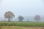 Europa, DEU, Deutschland, Nordrhein Westfalen, NRW, Rheinland, Niederrhein, Kerken, Agrarlandschaft, Morgendunst, Landschaft, Dunst, Baeume, , Kategorien und Themen, Natur, Umwelt, Landschaft, Landschaftsfotos, Landschaftsfotografie, Landschaftsfoto, Wetter, Wetterelemente, Wetterlage, Wetterkunde, Witterung, Witterungsbedingungen, Wettererscheinungen, Meteorologie, Wettervorhersage<br /> <br /> <br /> [Fuer die Nutzung gelten die jeweils gueltigen Allgemeinen Liefer-und Geschaeftsbedingungen. Nutzung nur gegen Verwendungsmeldung und Nachweis. Download der AGB unter http://www.image-box.com oder werden auf Anfrage zugesendet. Freigabe ist vorher erforderlich. Jede Nutzung des Fotos ist honorarpflichtig gemaess derzeit gueltiger MFM Liste - Kontakt, Uwe Schmid-Fotografie, Duisburg, Tel. (+49).2065.677997, archiv@image-box.com, www.image-box.com]