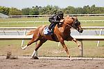 #48Fasig-Tipton Florida Sale,Under Tack Show. Palm Meadows Florida 03-23-2012 Arron Haggart/Eclipse Sportswire.