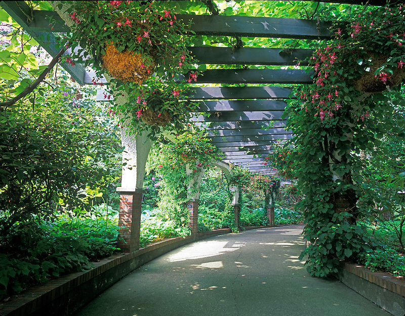 Fuschia lined walkway. Park and Tilford Garden. Vancouver, BC