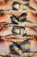 France, Calvados (14), Côte Fleurie, Trouville-sur-Mer,  sur un Etal de la Halle aux poissons de Trouville-sur-Mer  - Tourteau x //  France, Calvados, Côte Fleurie, Trouville sur Mer,   Trouville sur Mer fish market stall, crabs