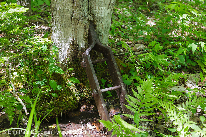 """Tree growing around an artifact along a spur line of the old East Branch & Lincoln logging Railroad (1893-1948) in the Pemigewasset Wilderness of Lincoln, New Hampshire. This metal bracket was bolted to each end of a """"Reach"""". A reach was a spruce beam used to connect loaded log trucks."""