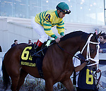 Feb 2010: Devil May Care and Javier Castellano before the SilverBulletDay Stakes at the Fairgrounds in New Orleans, La.