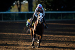 November 3, 2020: Tiz The Law, trained by trainer Barclay Tagg, exercises in preparation for the Breeders' Cup Classic at Keeneland Racetrack in Lexington, Kentucky on November 3, 2020. Jon Durr/Eclipse Sportswire/Breeders Cup