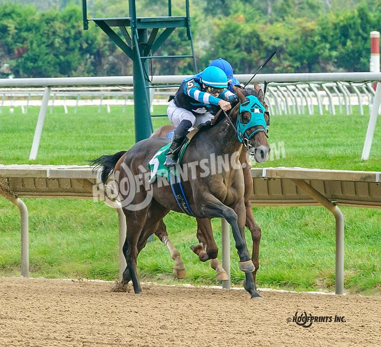 Offlee Graysful winning at Delaware Park on 10/4/21