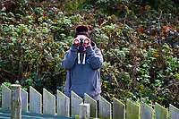 Pictured: Member of staff Kirsten Arnold helps in the search for the missing lynx at Borth Wild Animal Kingdom (formerly Borth Animalarium) , Ceredigion Wales UK. Monday 30 October 2017<br /> Re: The search continues for Lillith, a juvenile European Lynx, (latin name Lynx Lynx) which escaped from its enclosure at Both Wild Animal Kingdom.  A police helicopter with thermal imaging cameras spotted the animal  in undergrowth near the zoo in the  3early evening yesterday, raising hopes that the creature has gone to ground close to its home