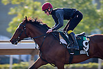 SHA TIN,HONG KONG-DECEMBER 09: Highland Reel,trained by Aidan O'brien,exercises in preparation for the Hong Kong Vase at Sha Tin Racecourse on December 9,2016 in Sha Tin,New Territories,Hong Kong (Photo by Kaz Ishida/Eclipse Sportswire/Getty Images)