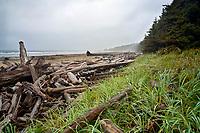 Coastal beach at start of Ericsons Bay Trail, Olympic National Park, Washington, USA