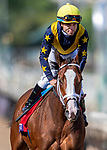 November 2, 2019: Covfefe, ridden by Joel Rosario, wins the Breeders' Cup Filly & Mare Sprint on Breeders' Cup World Championship Friday at Santa Anita Park on November 2, 2019: in Arcadia, California. Michael McInally/Eclipse Sportswire/CSM