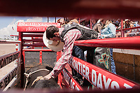 USA , Wyoming, Cheyenne Eli Vastbinder, Athens,TX,  shakes the bull Chorin One in the chute before riding at 2017 Cheyenne Frontyer days