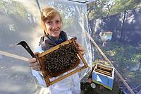 The apiculturist Lucie Hotier in a screened and enclosed apiary holds a frame with marked bees.<br /> CNRS. Université Paul Sabatier. Toulouse, France. L'apicultrice Lucie Hotier dans rucher voilé et fermé tient un cadre avec des abeilles marquées.