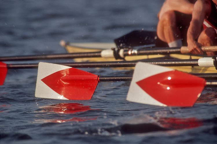 Rowing, Harvard blades or sweep oars, Harvard varsity men's eight at the catch, Charles River, Cambridge, Massachusetts