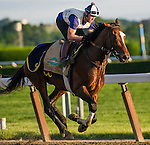 June 6, 2014: Tonalist exercises at Belmont Park as horses prepare for the Belmont Stakes in Elmont, New York. California Chrome and racing fans are awaiting his attempt to be the first Triple Crown winner in 36 years. Scott Serio/ESW/CSM