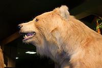 Bär im Zoologische Museum, Martin-Luther-King-Platz 3, Hamburg, Deutschland