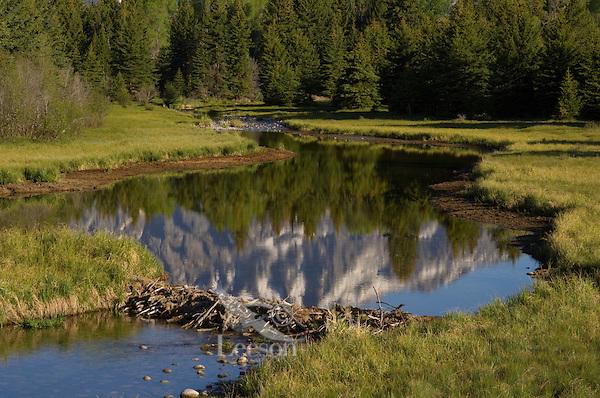 Beaver Pond near the Snake River in Grand Teton National Park, Wyoming.  Spring.