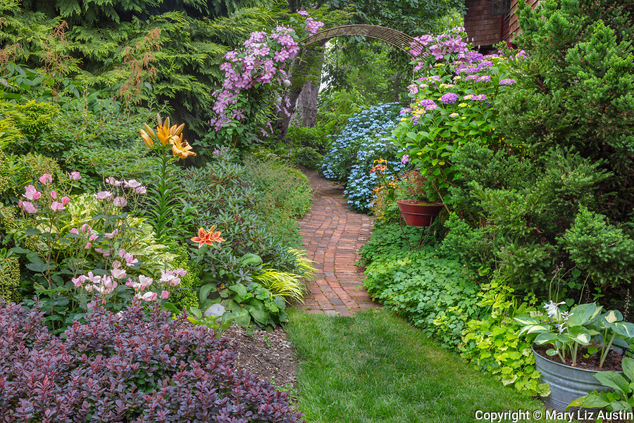 Vashon-Maury Island, WA: Summer perennial garden with clematis trellis and brick pathway. Perennials include barberry, liles, hostas, roses and hydrangeas