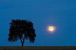 Europa, DEU, Deutschland, Rheinland Pfalz, Naturpark Saar-Hunsrueck, Saarburg, Landschaft, Baum, Silhouette, Daemmerung, Himmel, Mond, Vollmond, Mondaufgang, Kategorien und Themen, Natur, Umwelt, Landschaft, Jahreszeiten, Stimmungen, Landschaftsfotografie, Landschaften, Landschaftsphoto, Landschaftsphotographie, Nachtaufnahmen, Nachts, Nacht, Daemmerung, Abend, Abends, Mischlicht, Available Light Photographie....[Fuer die Nutzung gelten die jeweils gueltigen Allgemeinen Liefer-und Geschaeftsbedingungen. Nutzung nur gegen Verwendungsmeldung und Nachweis. Download der AGB unter http://www.image-box.com oder werden auf Anfrage zugesendet. Freigabe ist vorher erforderlich. Jede Nutzung des Fotos ist honorarpflichtig gemaess derzeit gueltiger MFM Liste - Kontakt, Uwe Schmid-Fotografie, Duisburg, Tel. (+49).2065.677997, ..archiv@image-box.com, www.image-box.com]