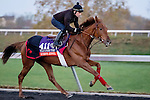 October 29, 2015:  Queen's Jewel (GB), trained by Freddy Head and owned by Wertheimer et Frere, exercises in preparation for the Breeders' Cup Filly & Mare Turf at Keeneland Race Track in Lexington, Kentucky on October 29, 2015. Jon Durr/ESW/CSM