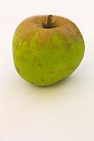 Europe/France/Normandie/Basse-Normandie/50/Batenton: Maison de la Pomme et de la Poire - Exposition de Pommes à Cidre: Variété Romany //  France, Manche, Batenton, House of the Apple and Pear Cider apples Exhibition , Romany cultivar