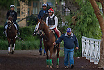 October 28, 2014:  California Chrome, trained by Art Sherman, exercises in preparation for the Breeders' Cup Classic at Santa Anita Race Course in Arcadia, California on October 28, 2014. Scott Serio/ESW/CSM