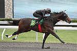 April 03, 2014: Hip 61 Medaglia d'oro - Victory Ride consigned by Eddie Woods worked 1/4 in 20:0.  Candice Chavez/ESW/CSM