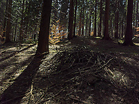 FOREST_LOCATION_90213