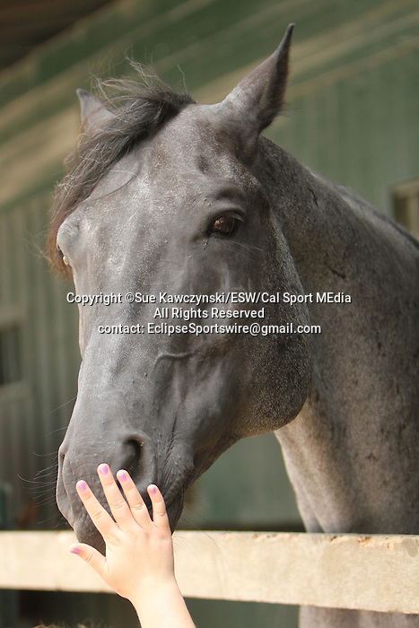 August 17, 2014: Pony at the Pony Barn in the backstretch barns at Saratoga Racetrack. Sue Kawczynski/ESW/CSM