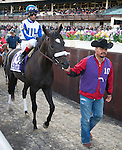 Morning Line, jockey John Velasquez, heads to the track before winning the Carter Handicap at Aqueduct Race Track in Ozone Park, New York on April 9, 2011.