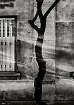 Paris Tree Shadow