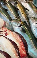 Fish for sale at the Tsukiji Fish Market, Tokyo, Japan