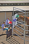 Sarah Borrey & Barbara Linsley Working Trial, Choosing Colored Buckets