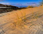 Dunes, Pismo State Beach, San Luis Obispo County, California