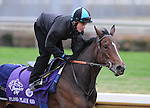 3 November 2010:  Flood Plain (GB), trained by John H.M. Gosden and to be ridden by jockey William Buick, works out for the 2010 Breeders Cup at Churchill Downs in Louisville, Kentucky.(Scott Serio/Eclipse Sportswire)