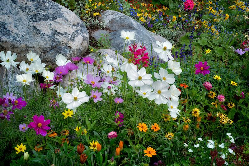 Mixed flowers in garden in Vail Village. Vail Colorado