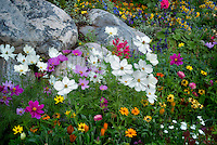 Mixed flowers in garden in Vail Village. Vail Colorado