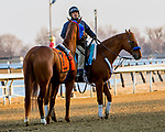 MARCH 09, 2019 : Post parade Not That Brady dumped rider Reylu Gutierrez, the Gotham Stakes for 3-year olds at Aqueduct Racetrack on March  09, 2019 in Ozone Park, NY.  Sue Kawczynski/ESW/CSM
