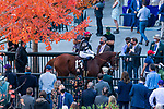 November 6, 2020: Second Of July, ridden by Dylan Davis, walks through the paddock at Keeneland Racetrack in Lexington, Kentucky, on Friday, November 6, 2020. Scott Serio/Eclipse Sportswire/Breeders Cup/CSM