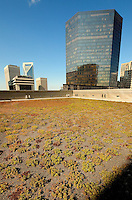 "The Charlotte Ritz-Carlton hotel roof is the location for Executive Chef Jon Farace's garden, cultivated for hotel culinary purposes and featuring lavender, mint and other fresh herbs and greens. The vegetated roof of the 18-story Ritz-Carlton, Charlotte is planted with 18,000 sedum plants to help reduce ""urban heat island effect."" The green surface reflects, slows rain runoff and insulates the rooftop, keeping the hotel building cooler overall."
