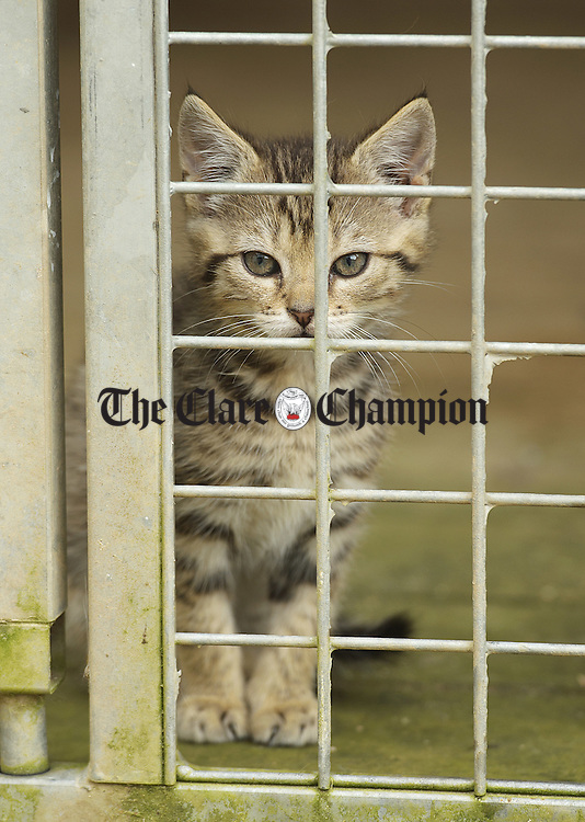 """A young resident at the """"An Cat Dubh Sanctuary"""" at Clounlaheen, near the Hand. Photograph by John Kelly."""